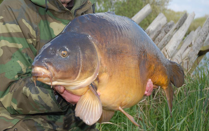Carping definition what is for Carp meaning