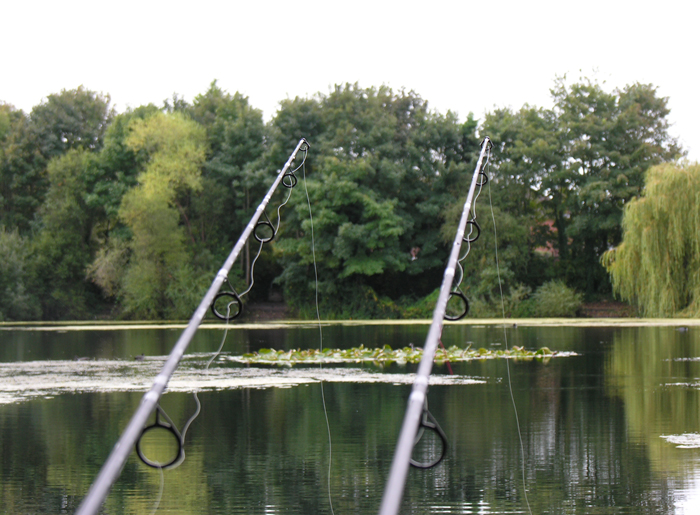 Slack lines hanging vertically from the rod tips